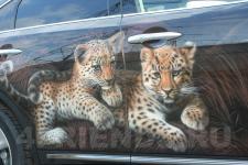 аэрография Infiniti FX35 леопарды - аэрография №7