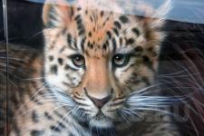 аэрография Infiniti FX35 леопарды - аэрография №8